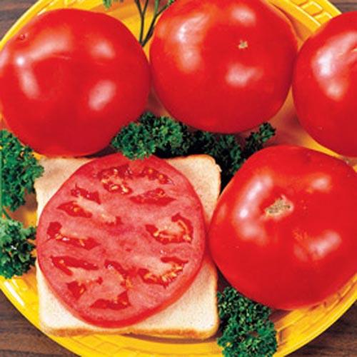 Celebrity-Tomato-1