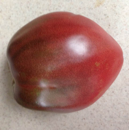 Cherokee Purple Heart