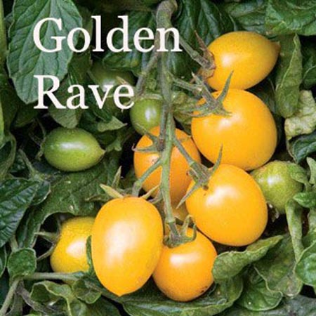 Golden Rave