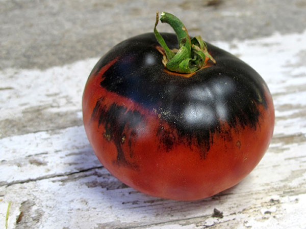 Indigo-Apple-Tomato-web