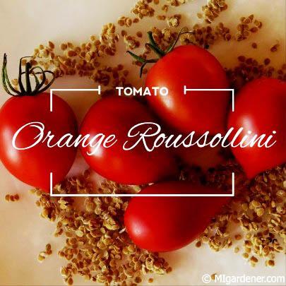 Orange Rossoullini
