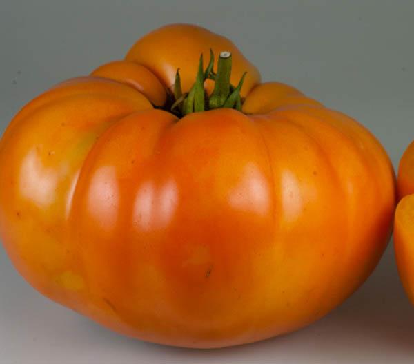 Orange Minsk tomato variety.