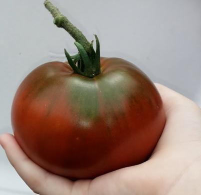 Paul Robison Tomato