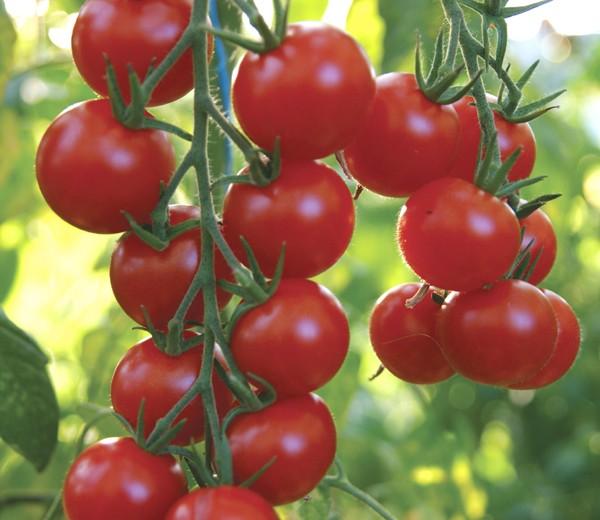 gardeners_delight